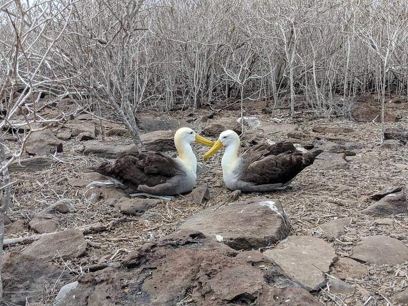 Galapagos Islands Trip - Albatross
