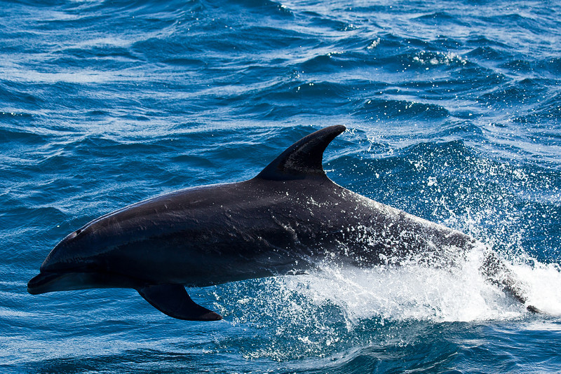 There was a pod of 5 swimming alongside the bow of the boat for about 10 minutes.