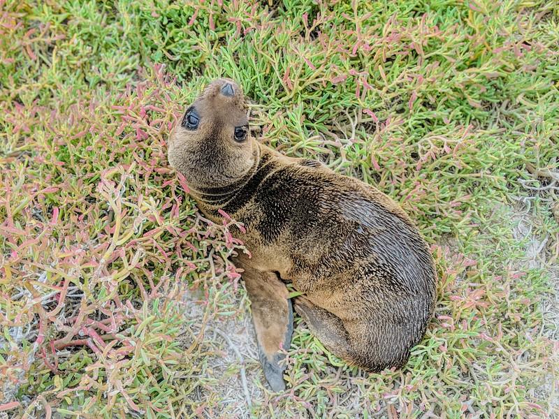 Galapagos Islands Trip - Baby sea lion