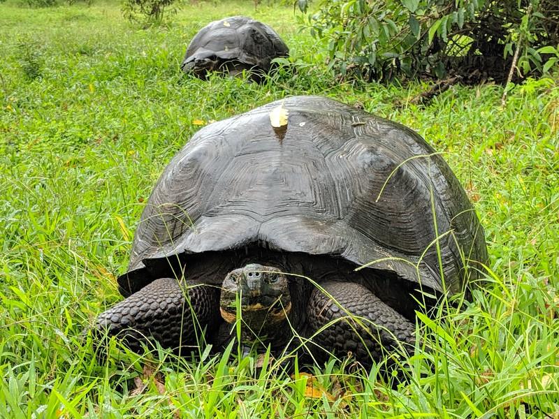 Galapagos Islands Trip - Giant tortoise