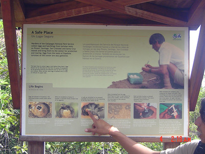 Tortoise info!