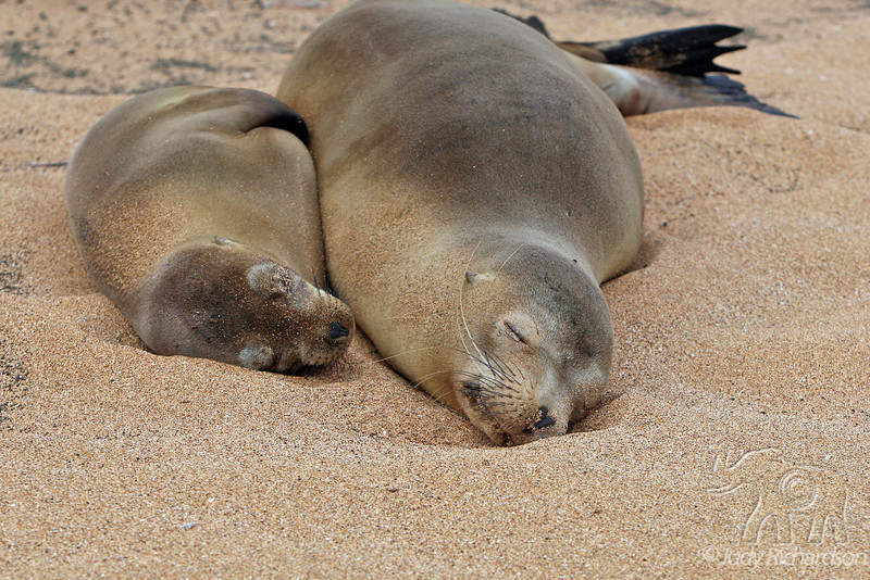 2 Sea Lions on beach at Bartolome Island