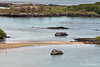 Greater Flamingos with zodiacs watching from both sides of sand spit on Floreana Island~Galapagos, Ecuador
