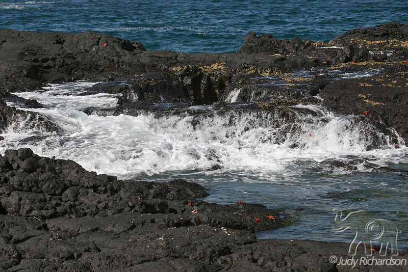 Tidal pool activity on Santiago Island~Galapagos, Ecuador