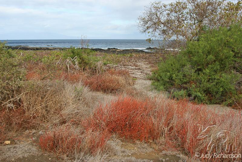 Colorful landscape on Santiago Island~Galapagos, Ecuador