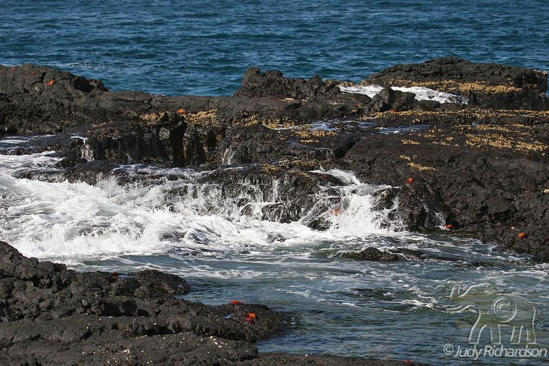 Tidal pool on Santiago Island~Galapagos, Ecuador
