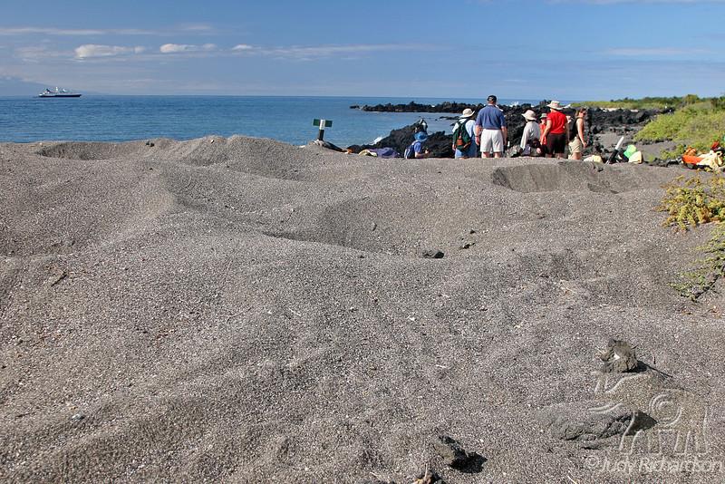 Turtle Nests & Fellow Travelers at Urbina Bay on Isabela Island