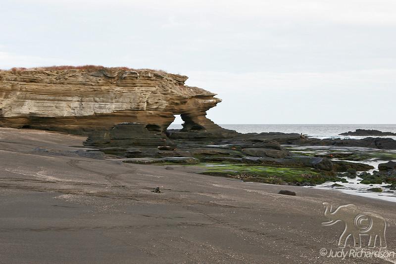 Scenic black sand beach with marine iguana & tracks at James Bay~Santiago Island
