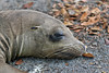 Sea Lion resting on Fernandina Island