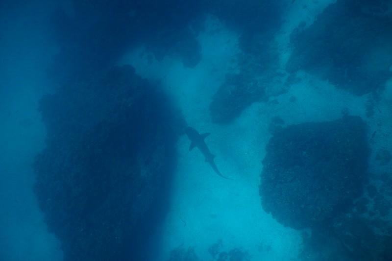 Corona del Diablo, Galapagos