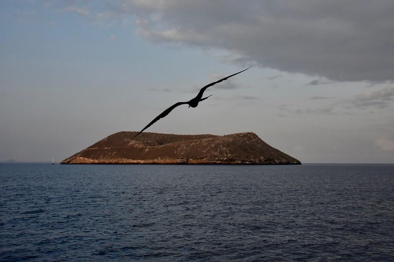 Daphne Mayor, Galapagos