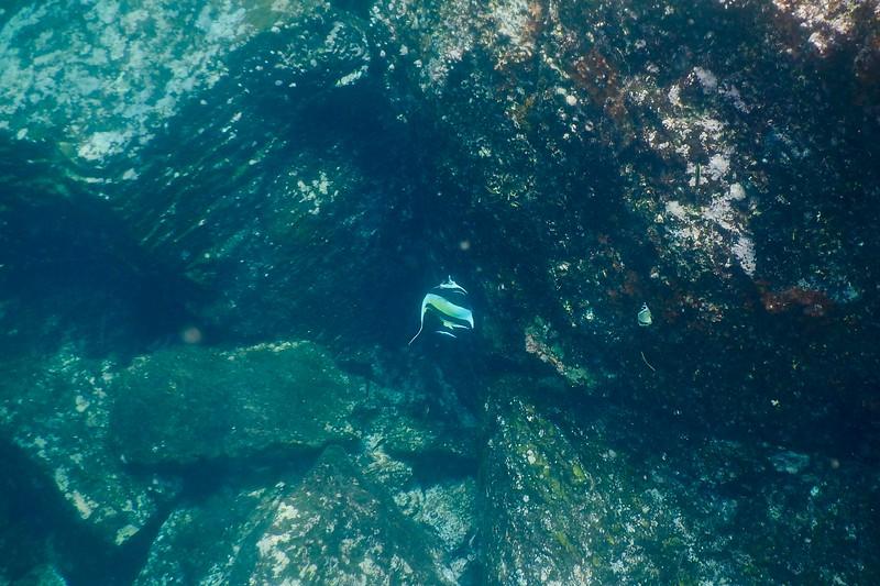 Darwin Bay, Galapagos