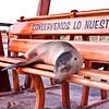 Sea Lion - San Cristobal, Galapagos.
