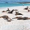 Pick a Pose-Isla Espańola-Galapagos