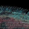 Closeup of Marine Iguana's Back Spines-Isla Espańola-Galapagos
