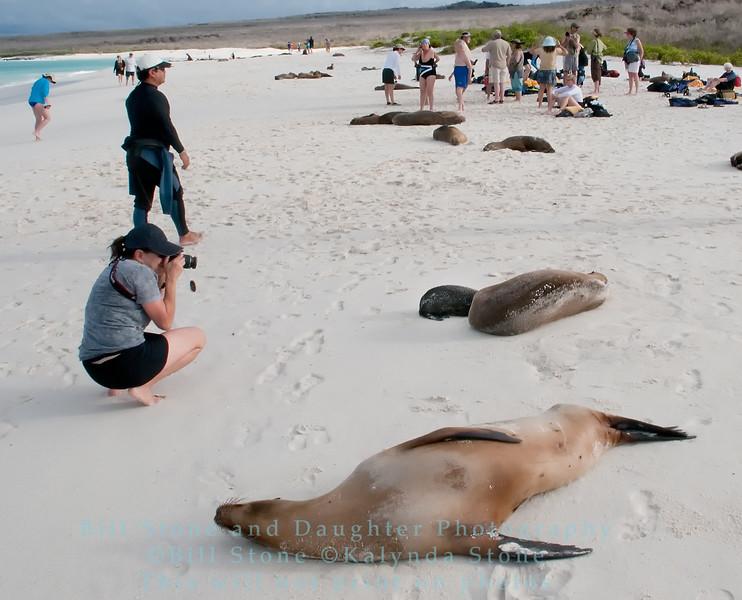 Photographing Mother and Pup Galapagos Sea Lion-Isla Espańola-Galapagos
