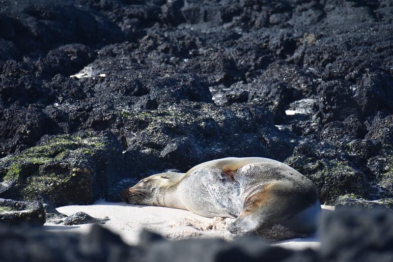 Las Bachas, Galapagos