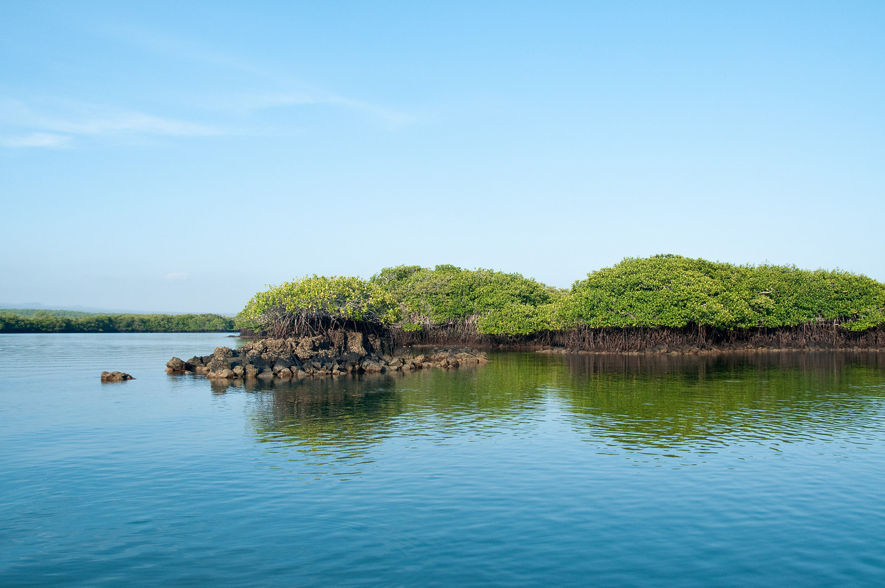 We toured the mangrove in two small boats, often poling with motors off for quiet.