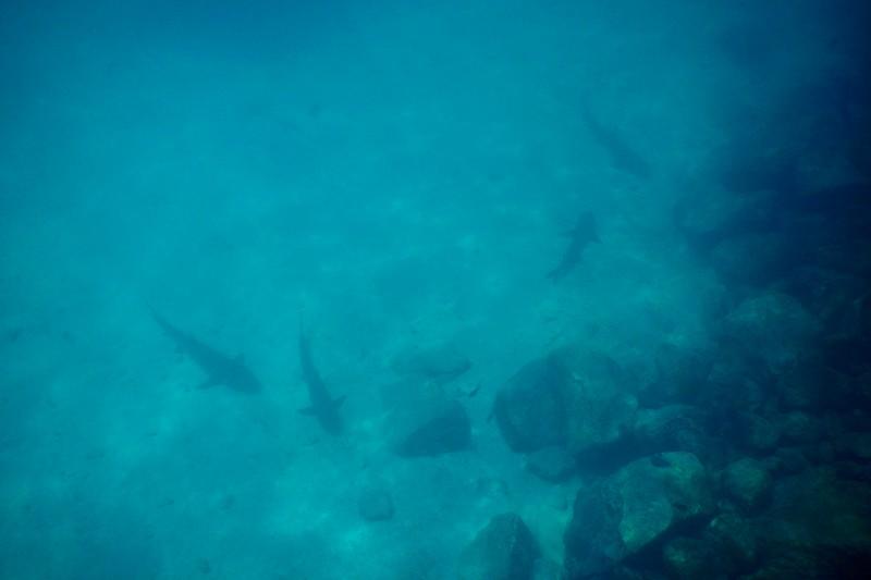 Mosquera, Galapagos