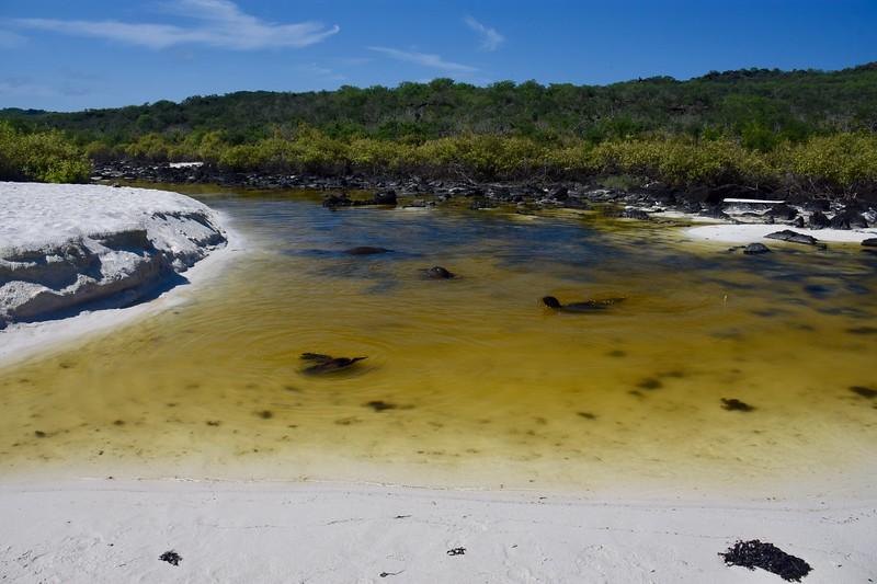 Playa Gardner, Galapagos