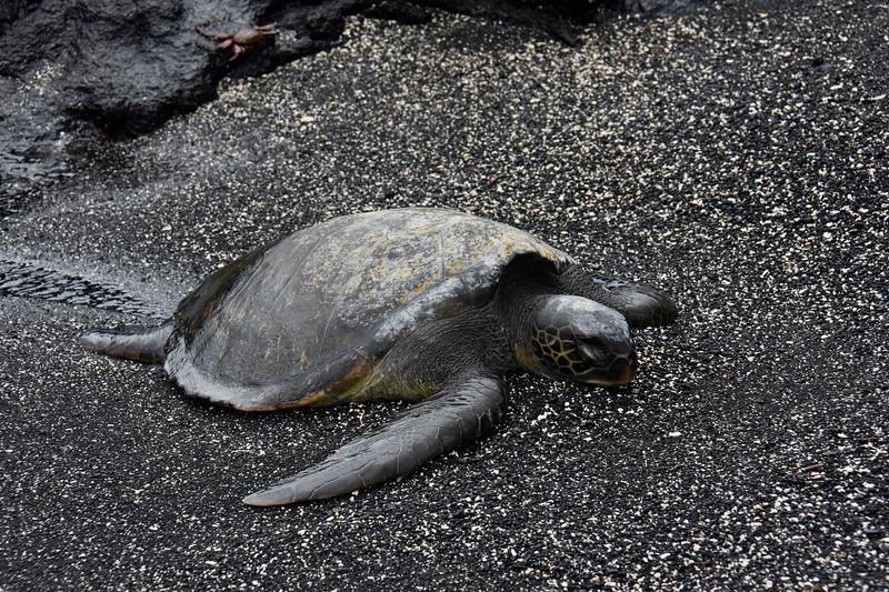 Punta Espinoza, Galapagos