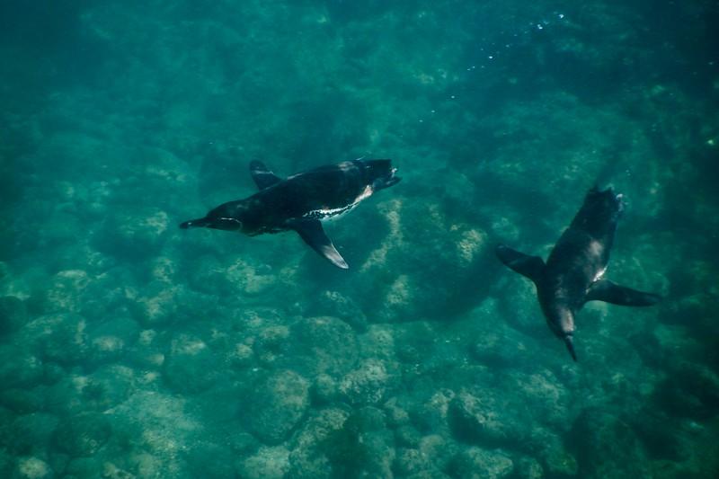 Punta Moreno, Galapagos