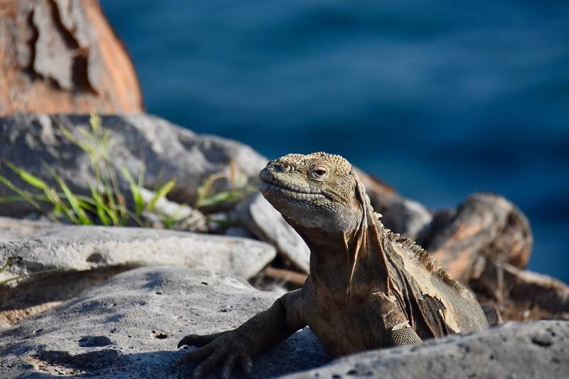 Santa Fe, Galapagos