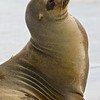 Galapagos06-0569