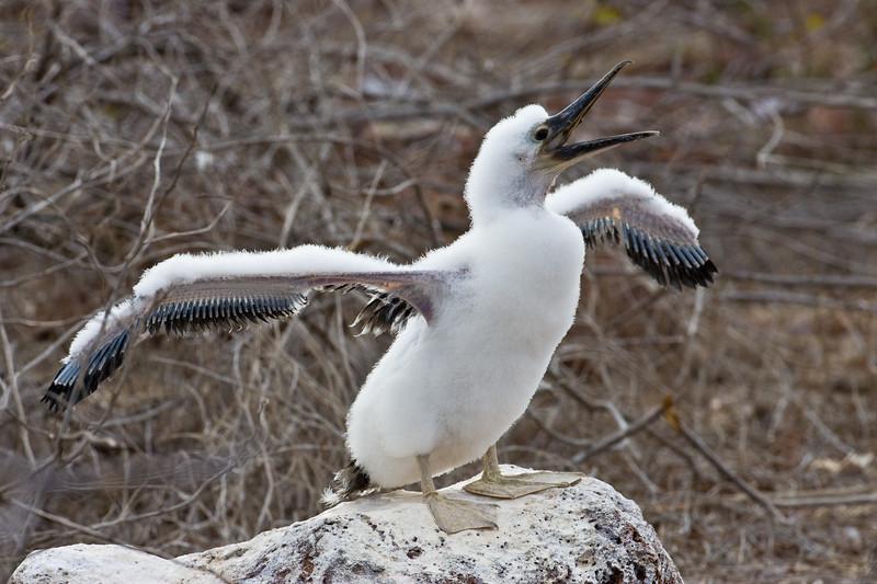 Galapagos06-0010