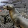 Galapagos06-0582
