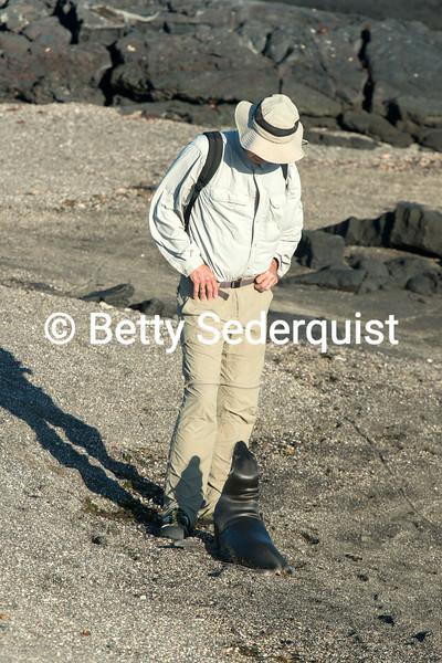 Baby Sea Lion and Tourist