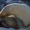 Galapagos06-0091