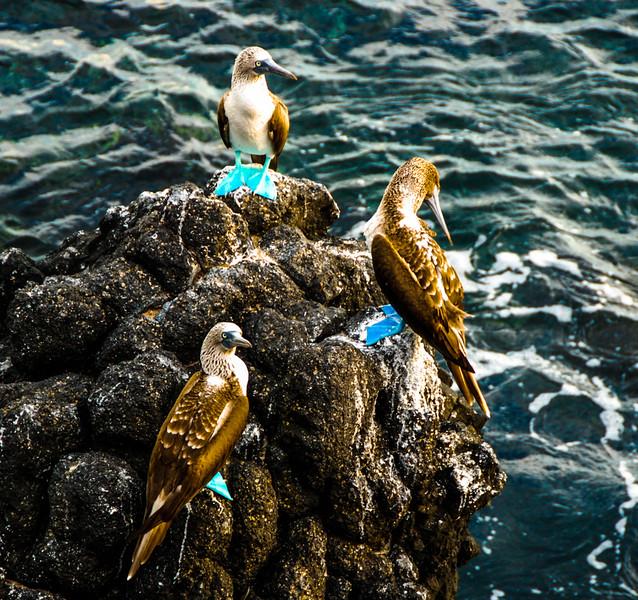 Galapagos-3