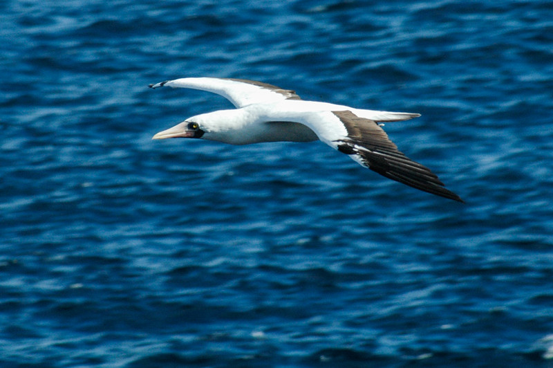Galapagos-30