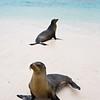 Galapagos06-0238