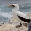 Galapagos06-0277