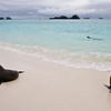 Galapagos06-0235