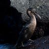 Galapagos06-0981