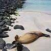 Galapagos06-0270