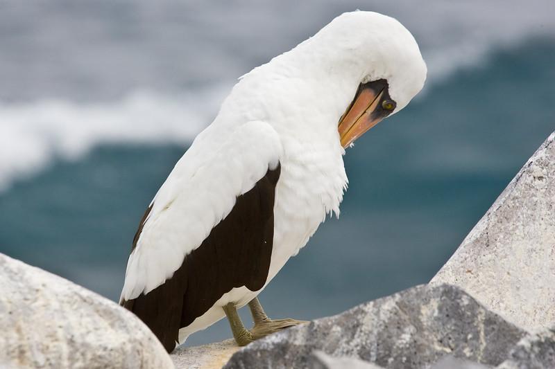 Galapagos06-0284