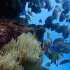 Snorkeling near Espanola Island