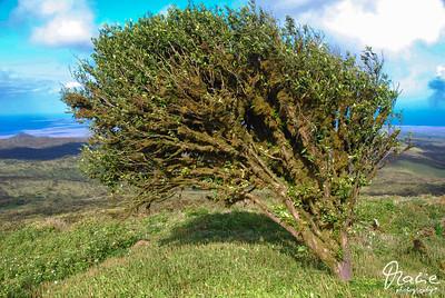 windschliff isla isabella galapagos