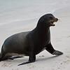 Galapagos06-0153