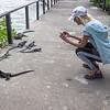 Photographing Marine Iguanas