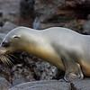 Galapagos06-0583