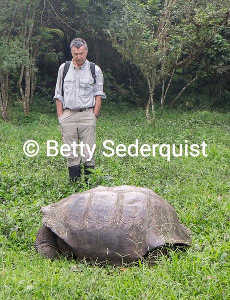 Examing a Giant Galapagos Tortoise