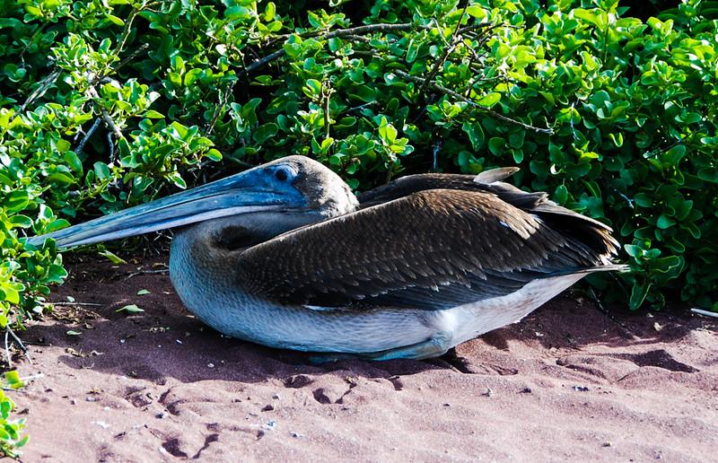 Galapagos-57