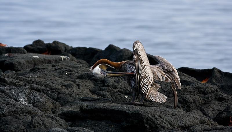 Galapagos06-0948
