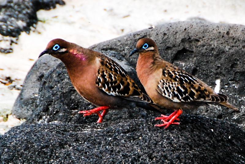 Galapagos-15