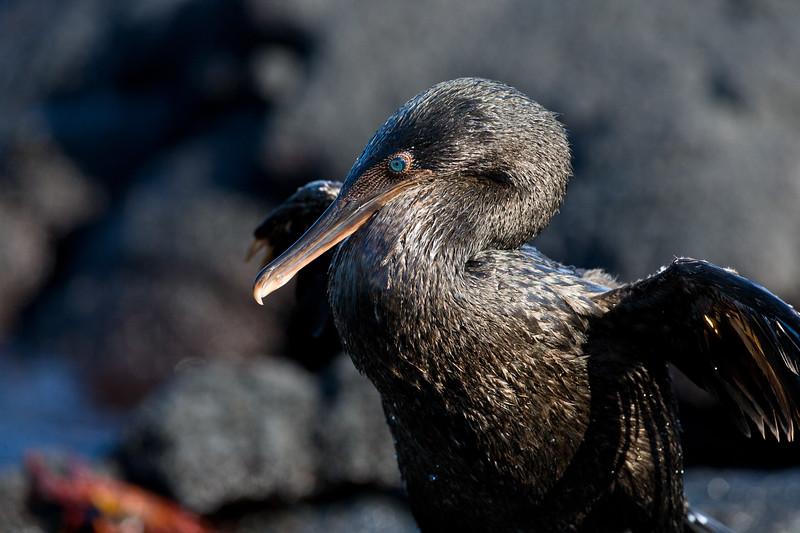 Galapagos06-0975